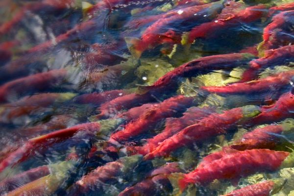 ESSA_page_Headers_Fisheries2